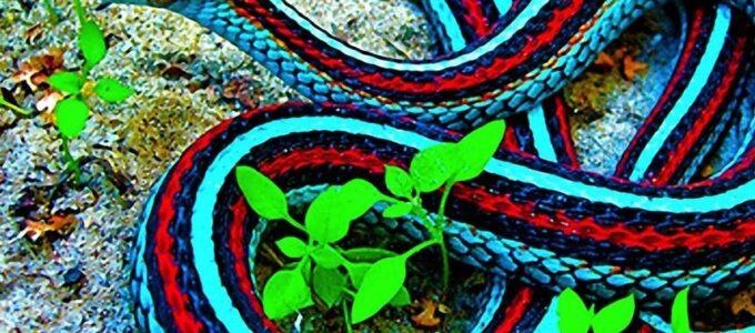 A rotina das cobras