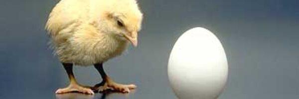 O ovo e o pinto